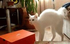белый кот испугался