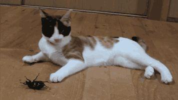 кот играет с жуком