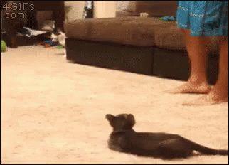 кот испугался игрушечного паука