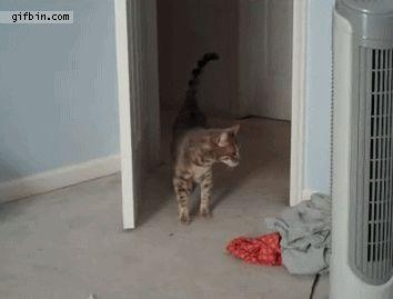 полосатый кот испугался