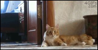 рыжий кот ушел на задних лапах