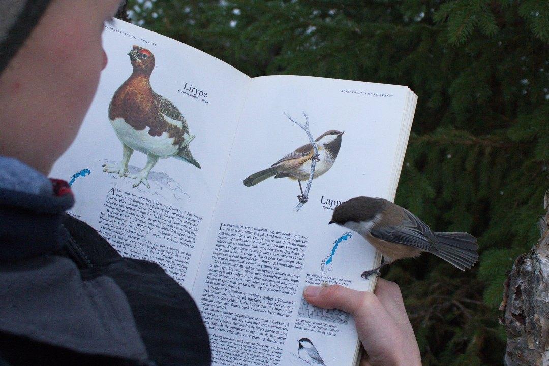 воробей сидит на книге о птицах