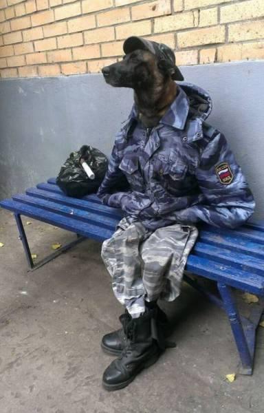 собака в униформе