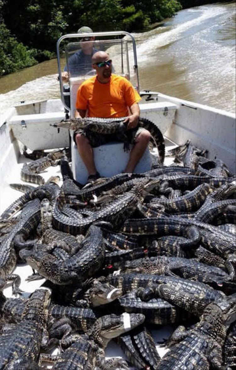мужчина среди крокодилов
