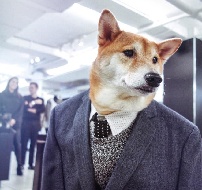 пес в пиджаке