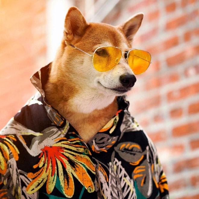 пес в цветной рубашке