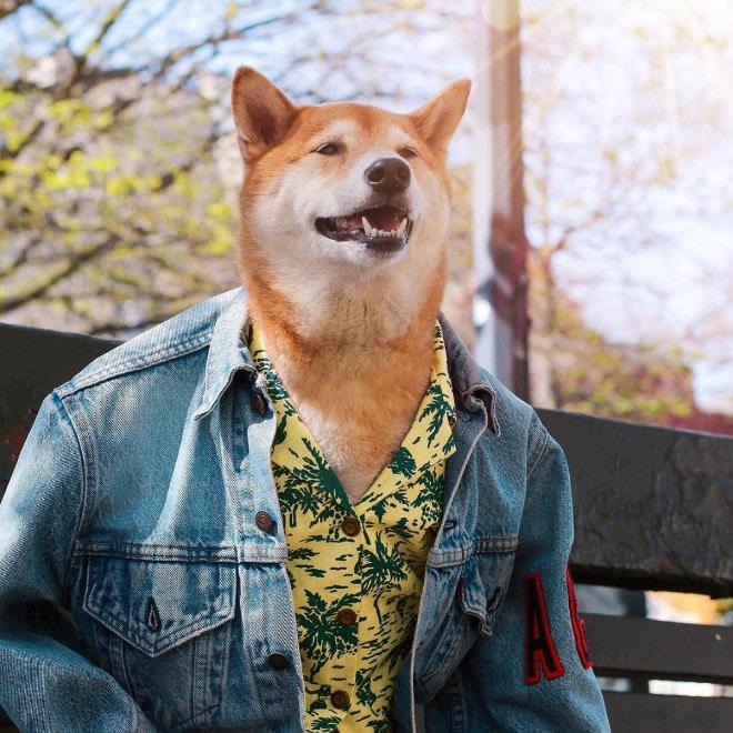 пес в джинсовке