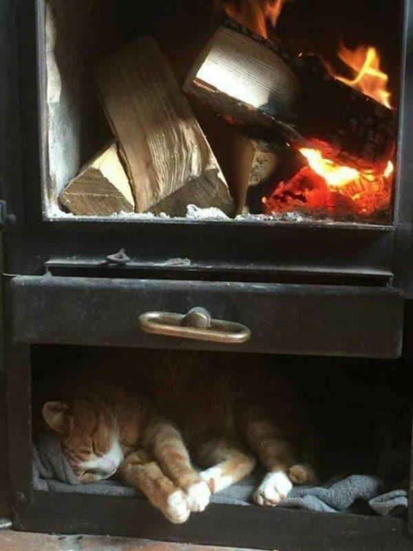 кот спит под камином