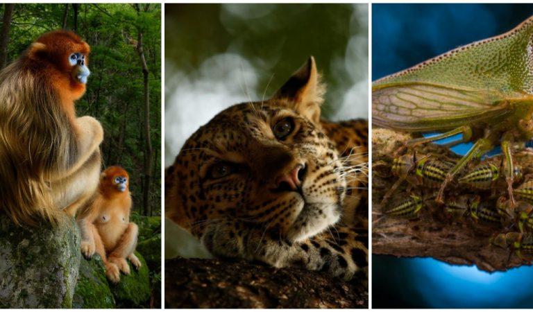 Идеальный кадр. 10 невероятных снимков от победителей конкурса на лучшее фото дикой природы