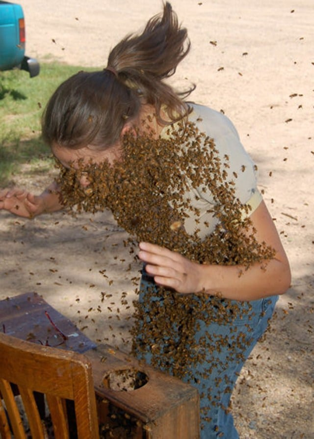 пчелы облепили девушку