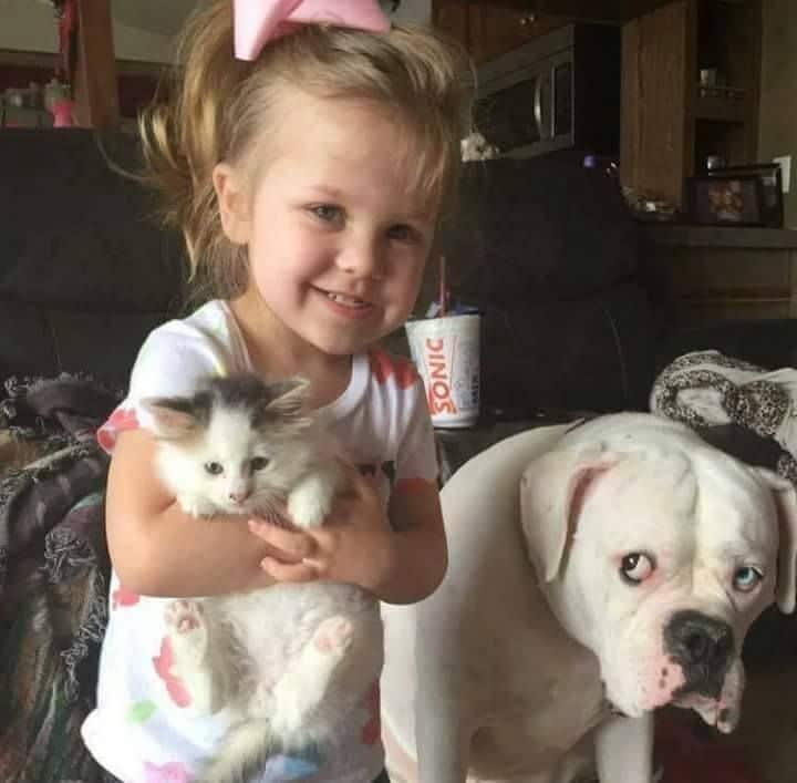 маленькая девочка с котенком и собакой