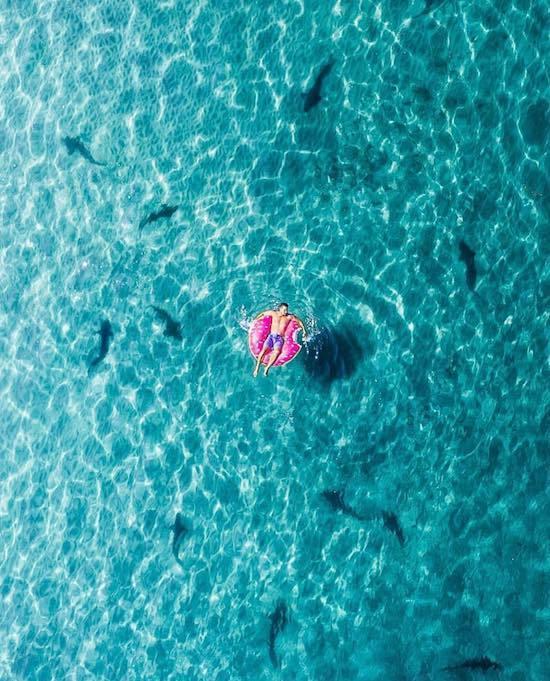 парень на надувном круге плавает среди акул