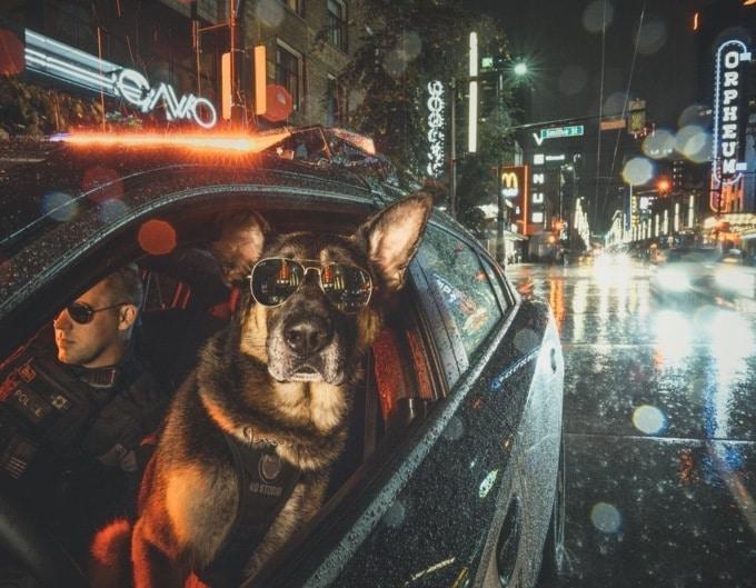 собака в очках в машине с мужчиной в очках в ночном городе