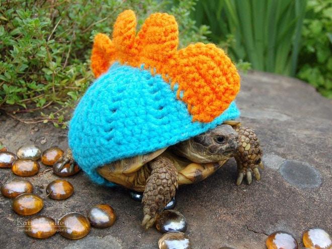 черепаха в смешном костюме