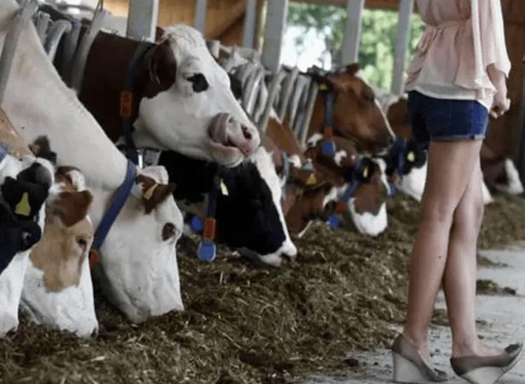 коровы и девушка