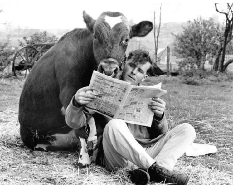 мужчина и корова читают газету