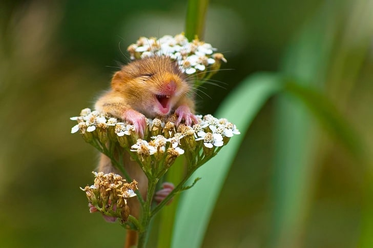 фото животных, фото животных смешные рис 10