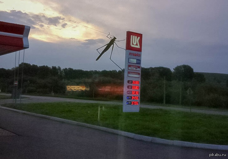 насекомое на лобовом стекле