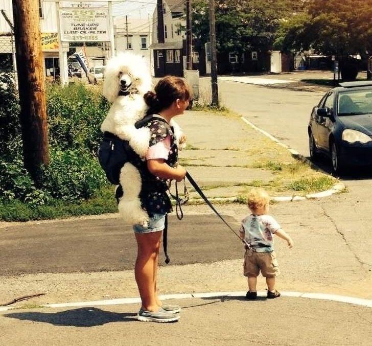 женщина с собакой и ребенком