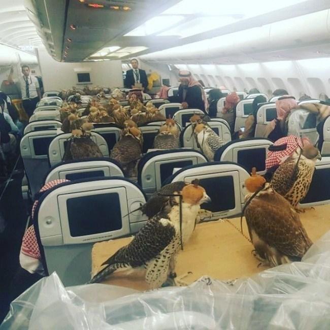 птицы в самолете