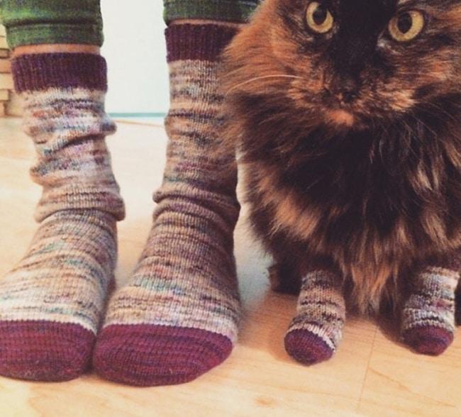 кошка в носках