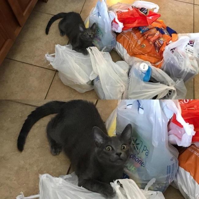 серый кот в пакетах