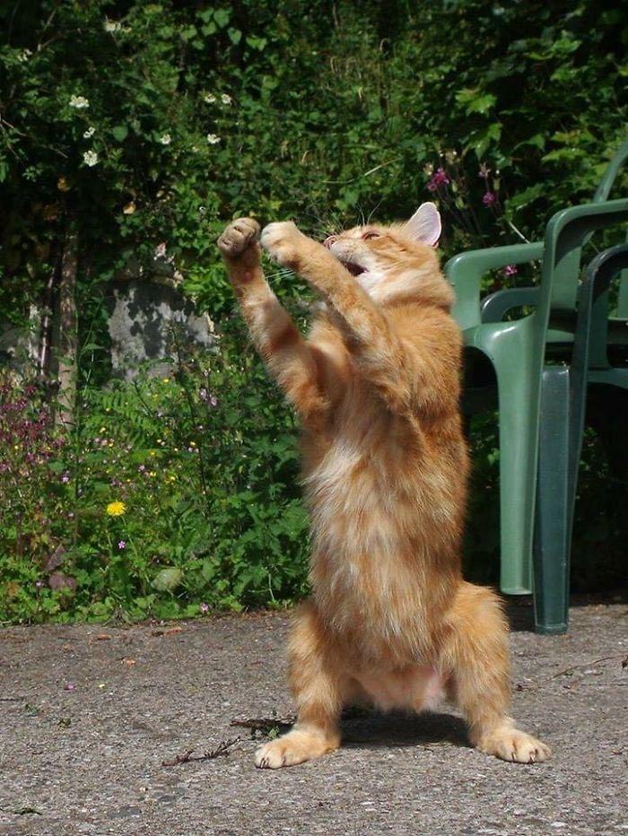 рыжий кот рис 4