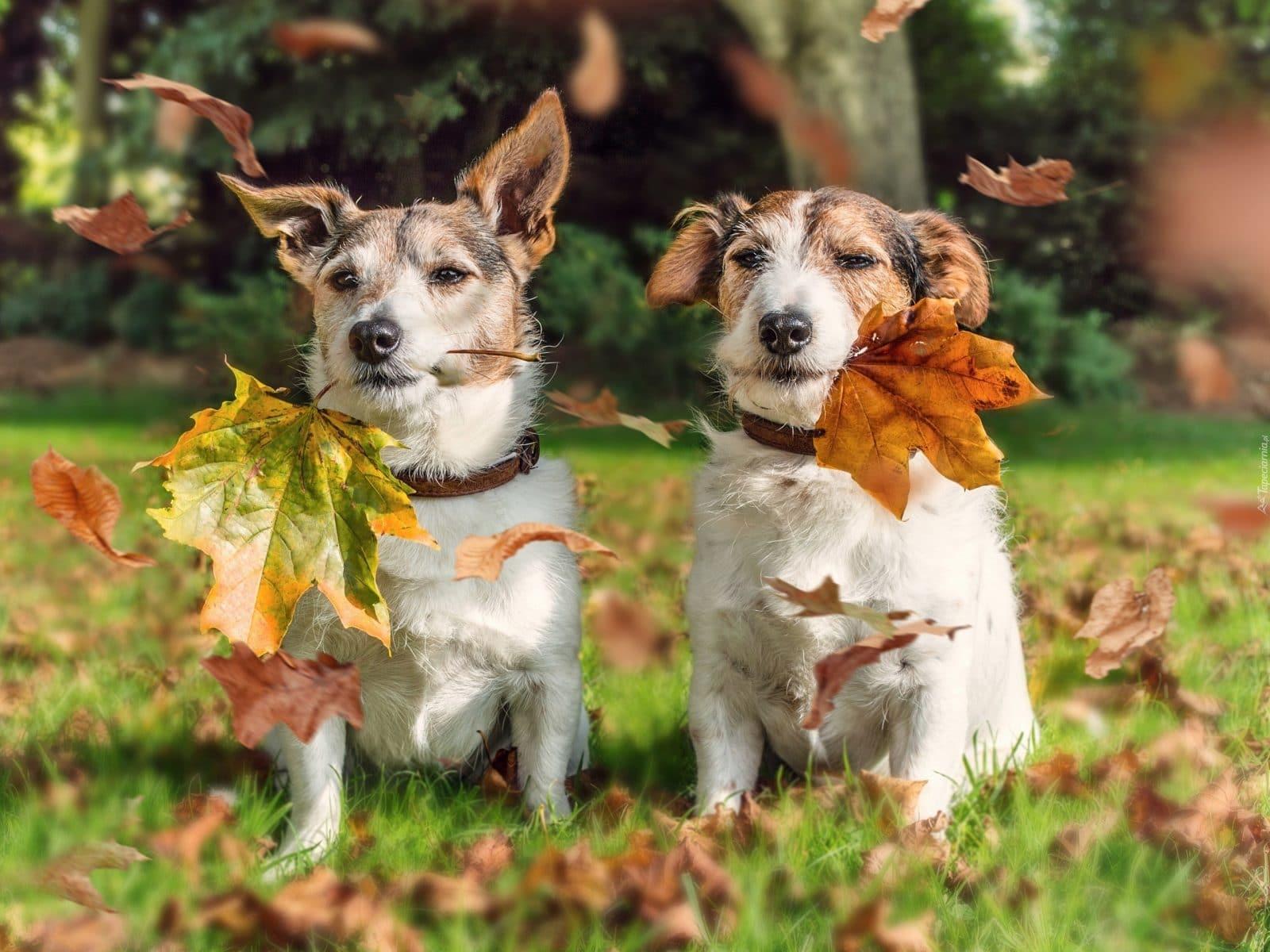 собаки листья осень