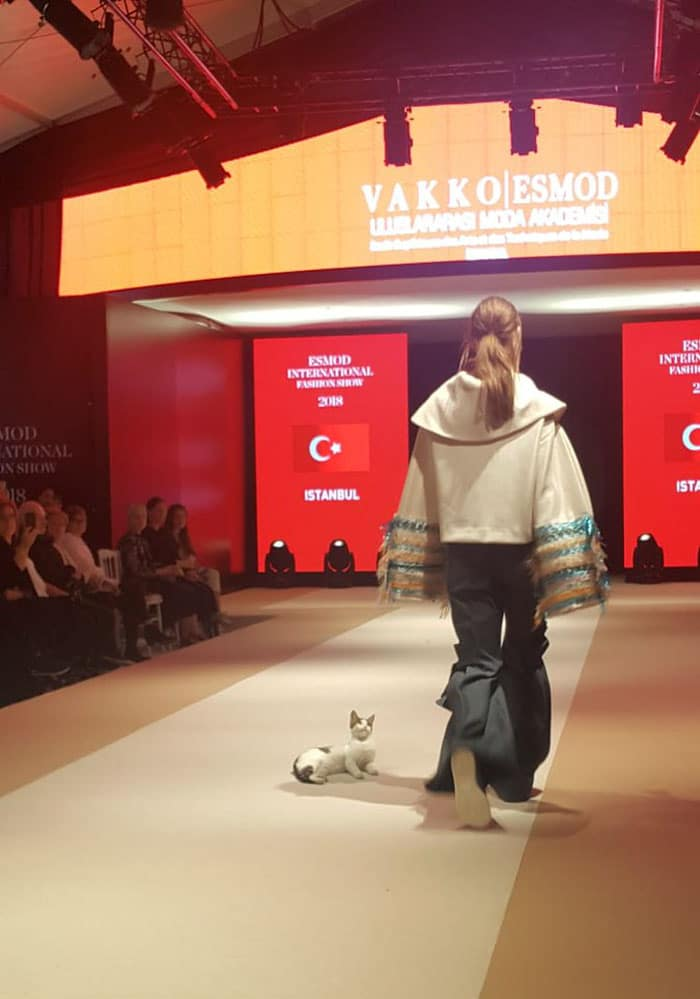 кошка, кошка фото, кошка на показе мод