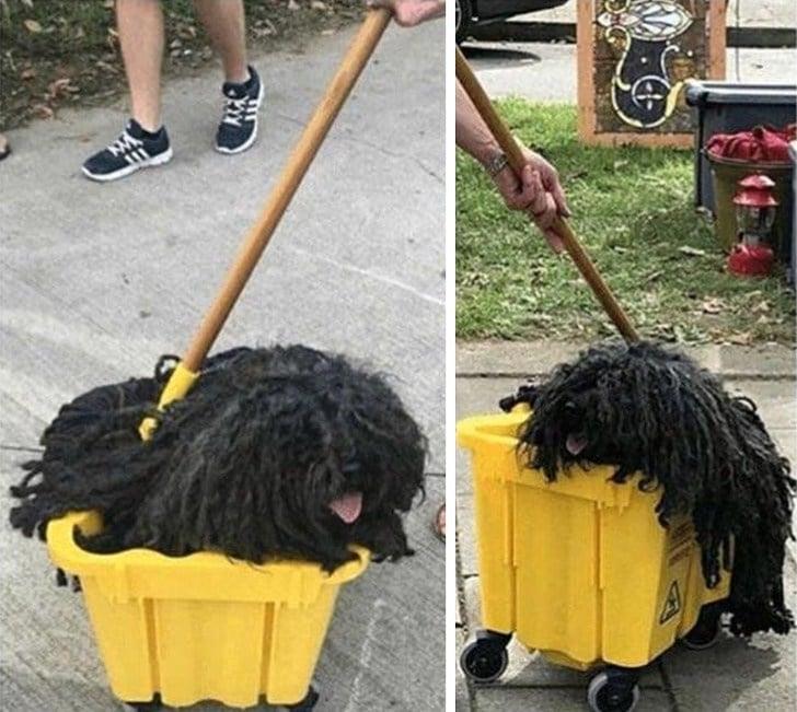 собака в желтом ведре