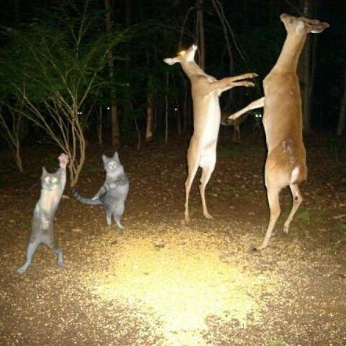 коты и олени танцуют