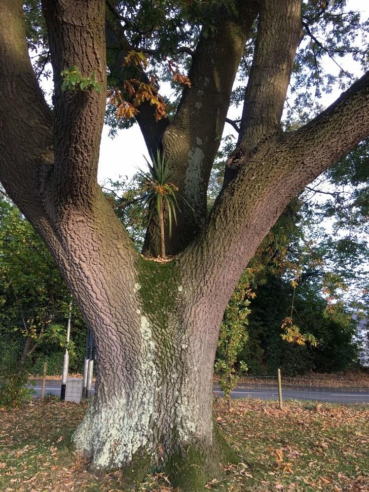 необычные дерево