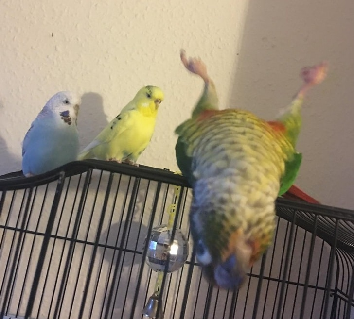смешной попугай