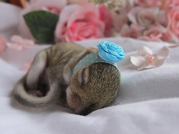 бельчонок спит