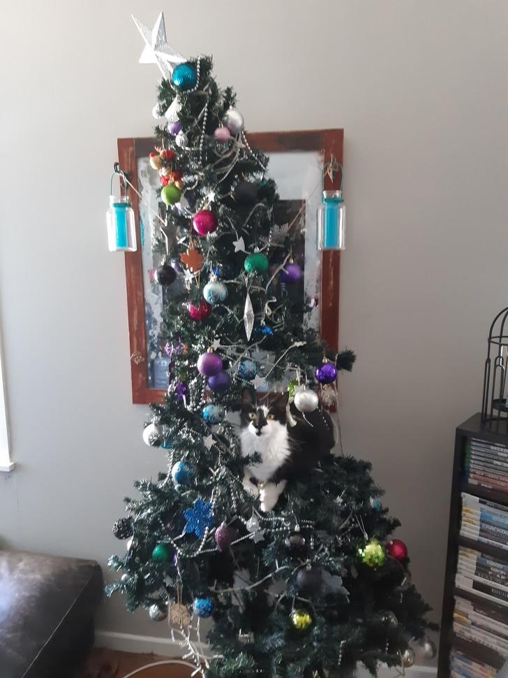 кот сидит на елке