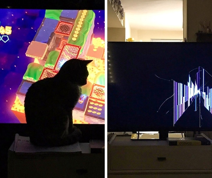 кот перед монитором