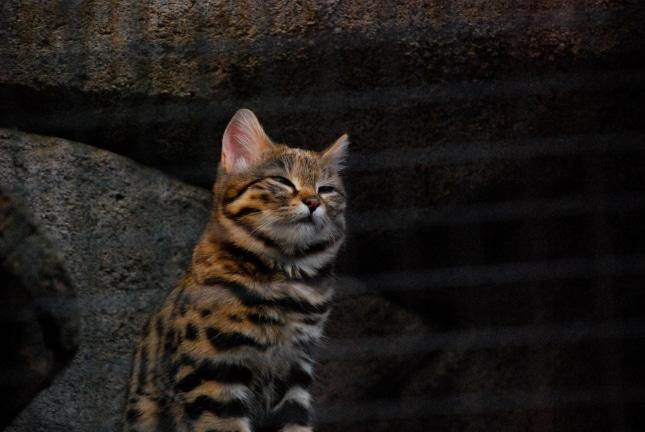 кот щурится