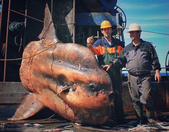 моряки с огромной рыбой