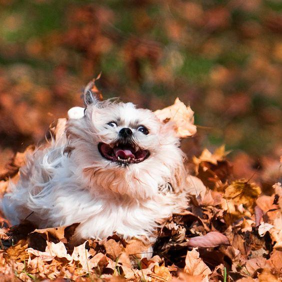 собака несется по листьям осенью
