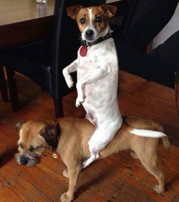 собака сидит на собаке