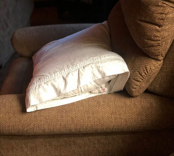 кошка спит в подушке