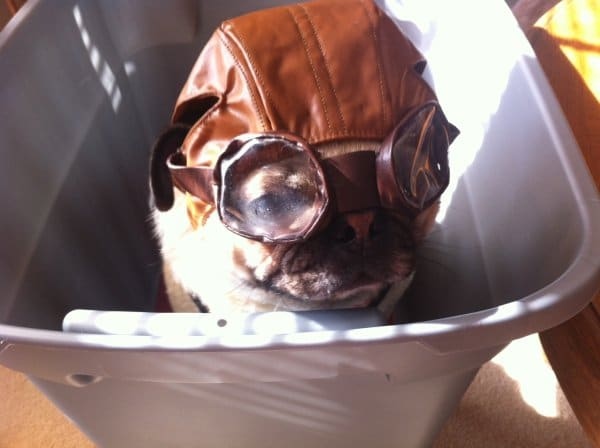 собака в очках и шлеме