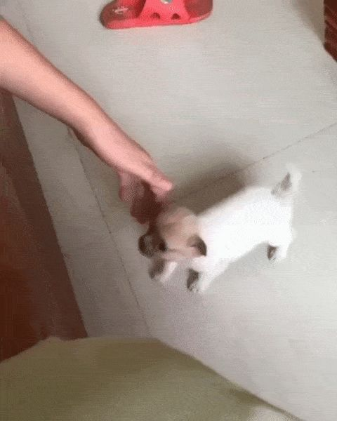 щенок залазит на диван