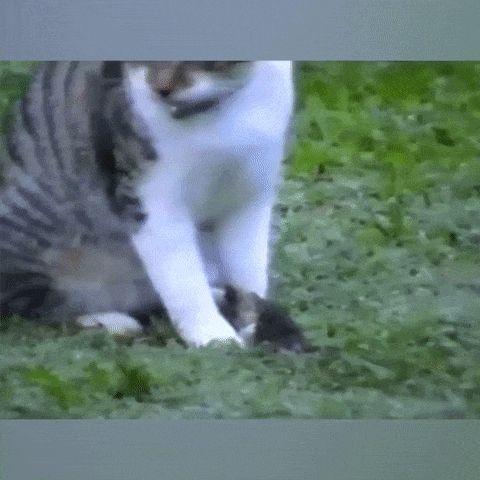 мышь ползет по коту