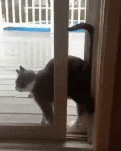 кот заходит в дверь