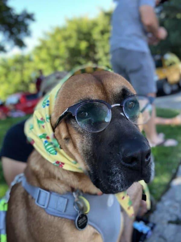 собака в платке и очках
