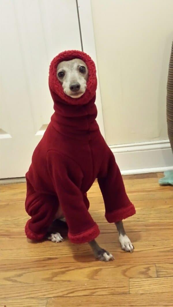 собака в красном свитере