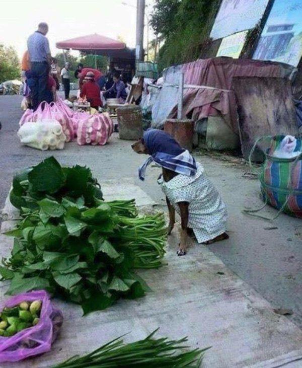 собака в платке продает зелень
