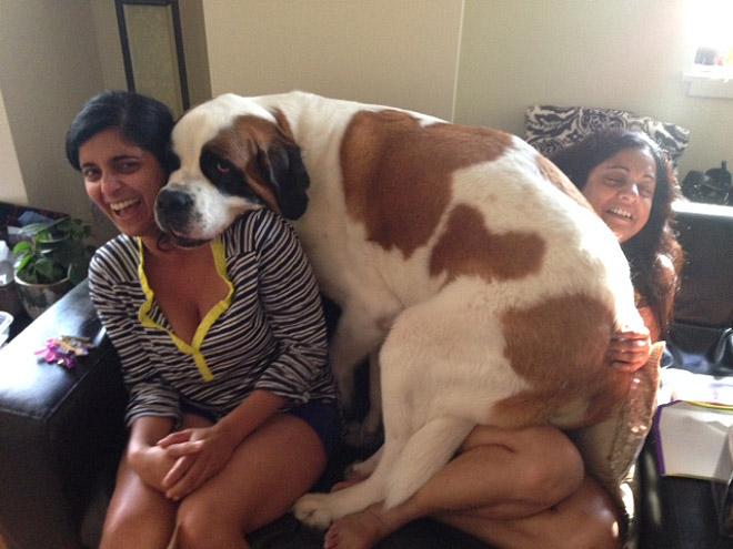 собака и девушки