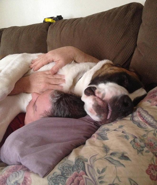 собака лежит с хозяином